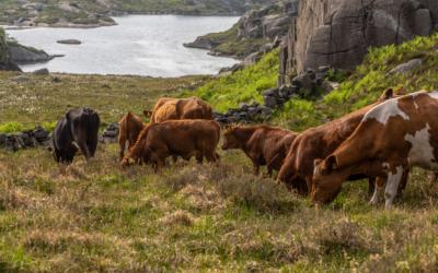 New GEOfood partner – Løyning gård